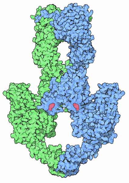 http://helicase.pbworks.com/f/1239426779/Topoisomerase_II.png